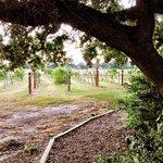 Messina Hof - Trail and Vineyard