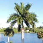 Stunning Palm trees