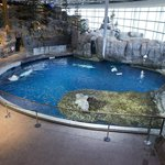 Here's a look at the Abbott Oceanarium exhibit - home to beluga whales, dolphins and sea otters.