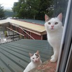 Our feline visitors,,,