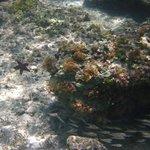 starfish and fishes