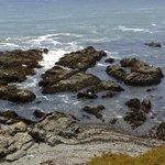 Seals Lying on the Rocks