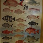 a poster of the different types of japanese fish.