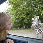 Peaugres Safari Parc
