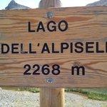 Alpisella