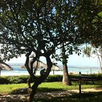 Monkeys in the tree, view from the snack bar onto the beach
