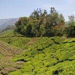 Beautiful lanscape in the Nilgiris Hills