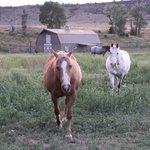 Trout House Horses - Paradise Gateway - Emigrant, MT