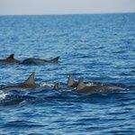 Lovina дельфины