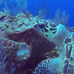 Sea Turtles on every dive