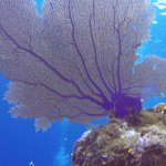 Healthy Happy Marine Life!