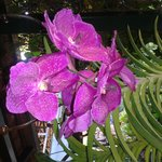 Muitas orquídeas