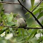 Flowerpecker- The smallest bird in India..Spotted in the trees of the resort