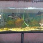 Fish aquarium in the sitting area