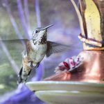 Hummingbirds just outside our patio door.