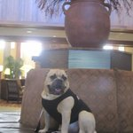 NICE lobby area....and dog friendly throughout the property
