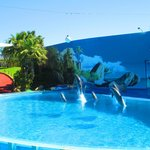 Dolphin show at Zoomarine