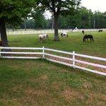 pastures/horses