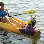 Even Molly our West Highland Terrier loves to kayak