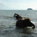Elephants and Gulf of Thailand...Koh Maak in the distance
