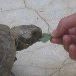 Ahhh... the tortoise