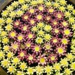 Composizione floreale realizzata dalle ragazze dell'hotel