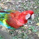 Un des nombreux perroquets