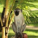 Monkey on my patio!