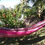hammocks hung for guests.