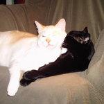 Inn Cats  Matt and Allie