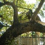 The Hippocrates Tree