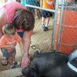 Gracie The Pig