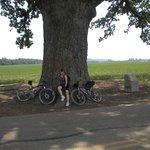 Big Oak tree just off the trail