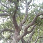Moss on Live Oak