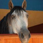 Un cavallo dell'agriturismo