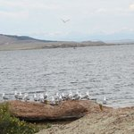 A view of the the lake and the loquacious gulls