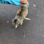 Princess the golf course cat