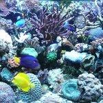 Gemütlich und klein, aber sehr freundlich mit einem schönem Aquarium