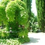 piante e profumi