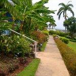 Grounds at Jamaica Inn