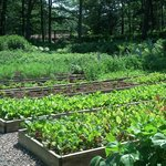 A small view of the extensive organic garden.