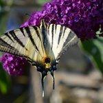traumhafte Fauna und Flora