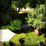 Garden view from window (notice the elk eating apples) :)