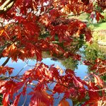 Colours of early autumn