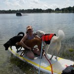 Dogs like to Paddleboard too!