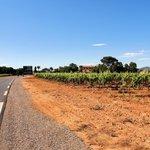 De weg tussen de wijngaarden naar La Londe les Maures