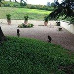 Die Falken bewachen die Anlage.