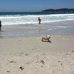 Rusty enjoying the beach in Carmel!