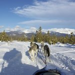 Dog sledding near the Continental Divide
