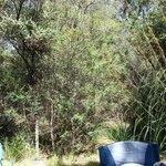 Bush around the campsite